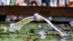 掛川花鳥園に行ったみた【鳥さん好きにはたまらないです】